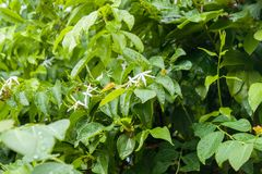 Blomma för vit blomma för vit blomma vit Royaltyfri Foto