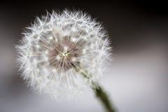Blomma för vit Arkivfoto