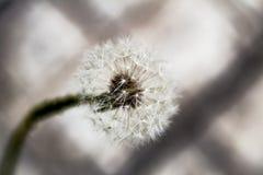 Blomma för vit Fotografering för Bildbyråer