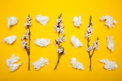 Blomma f?r v?r och f?r sommar och s?songsbetonade allergier royaltyfria bilder