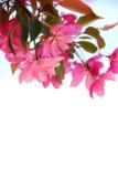 blomma filial arkivfoto