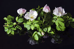 blomma filial arkivbild