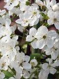 blomma filial Royaltyfria Foton