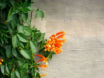 blomma filial Royaltyfria Bilder