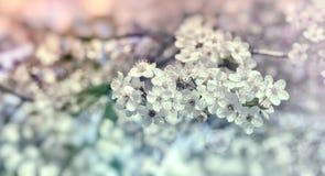 Blomma filialen av fruktträdet, härlig natur i vår royaltyfria bilder