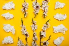 Blomma filialen med vita blommor och servetter från förkylningen, en vårallergi till blommor och pollen arkivfoto