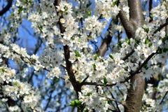 Blomma filialer Arkivfoton