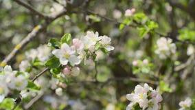 blomma filialtree