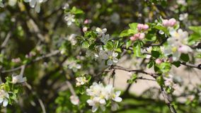 blomma filialtree stock video