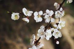 Blomma filialvåren royaltyfria foton