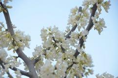 blomma fjäder Royaltyfri Foto