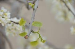 blomma fjäder Arkivbilder