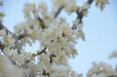 blomma fjäder Fotografering för Bildbyråer