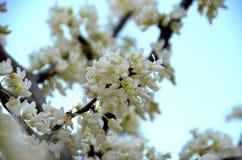 blomma fjäder Arkivbild
