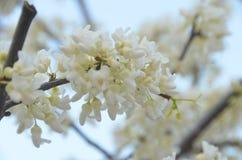 blomma fjäder Royaltyfri Bild