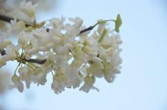 blomma fjäder Royaltyfri Fotografi