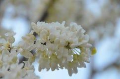 blomma fjäder arkivfoto
