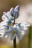 blomma fjädern Arkivbilder