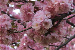 blomma fjädertree Arkivbilder