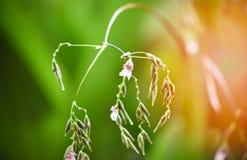 Blomma Flora Green royaltyfria bilder