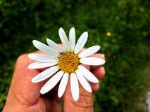 Blomma - Flores Arkivfoton