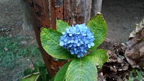 Blomma floror petal Träd vegetation royaltyfri bild