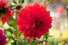 Blomma floror petal Träd vegetation fotografering för bildbyråer