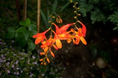 Blomma floror petal Träd vegetation royaltyfri fotografi