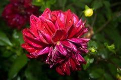 Blomma floror petal Träd vegetation royaltyfria bilder
