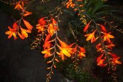 Blomma floror petal Träd vegetation arkivbilder