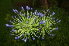 Blomma floror petal Träd vegetation royaltyfria foton