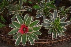 Blomma floror petal Träd vegetation arkivfoto