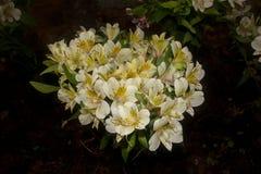 Blomma floror petal Träd vegetation arkivbild