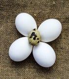 Blomma-formade fega ägg och vaktelägg För ägg- och vakteläggställningen för vit den fega sidan - förbi - sid på ett trägolv Royaltyfria Bilder