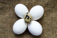 Blomma-formade fega ägg och vaktelägg För ägg- och vakteläggställningen för vit den fega sidan - förbi - sid på ett trägolv Royaltyfri Bild