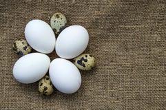 Blomma-formade fega ägg och vaktelägg För ägg- och vakteläggställningen för vit den fega sidan - förbi - sid på ett trägolv Arkivbild