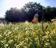 Blomma format lampanseende inom en trädgård av rapsfröt på ett nöjesfält i Sydkorea royaltyfri fotografi