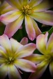 Blomma från norden Arkivfoto