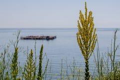 Blomma framme av havet Royaltyfri Foto