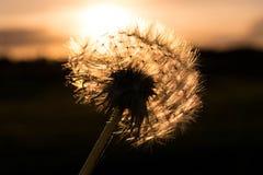 Blomma framme av solnedgången arkivfoto