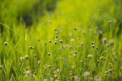 blomma gräs Royaltyfri Foto