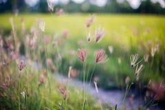 blomma gräs Royaltyfri Bild