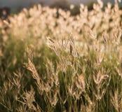 blomma gräs Arkivbild