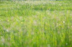 blomma gräs Arkivbilder