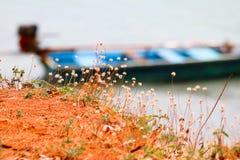 Blomma gräs med det lokala fartyget nära stranden Fotografering för Bildbyråer