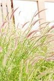 Blomma gräs som irrar väggarna av hus, lantlig husgarnering Royaltyfri Fotografi