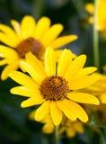 Blomma gul blomma arkivfoto