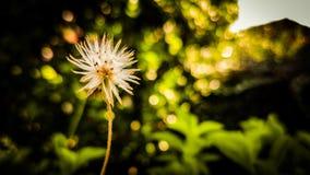 Blomma-handedly Fotografering för Bildbyråer