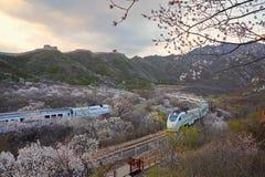Blomma havet och utbilda S2 linjen, Peking, Kina arkivbilder
