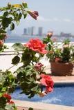 blomma hibiskusen Fotografering för Bildbyråer